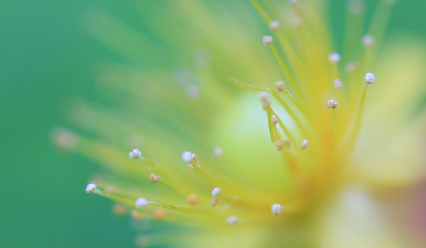 Macro Video - Canon 100MM f2.8L Macro Lens